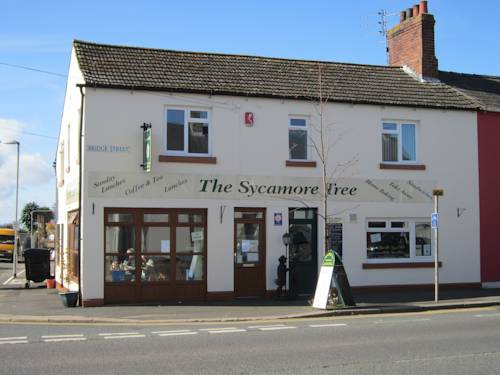 The Sycamore Tree in Cumbria