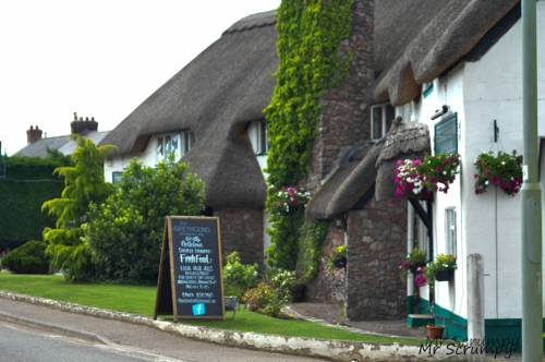Greyhound Country Inn in Devon